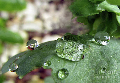 Photograph - Raindrops On Leaves #6 by Kim Tran