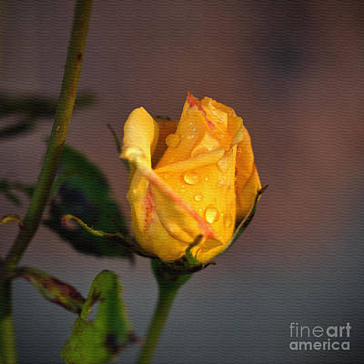 Photograph - Raindrops On Roses by Liz  Alderdice