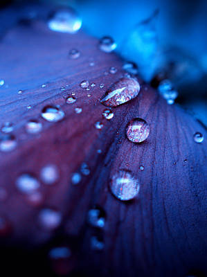 Photograph - Raindrops by Rachel Mirror