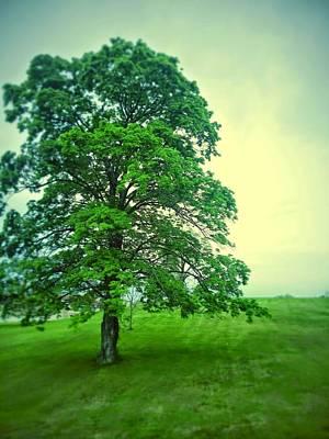 Aloha For Days - Random Tree by Dustin Soph