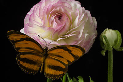 Ranunculus Flower Photograph - Ranunculus And Butterfly by Garry Gay