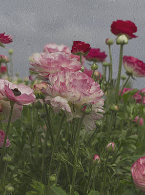 Painting - Ranunculus Flowers by Jessica Nguyen