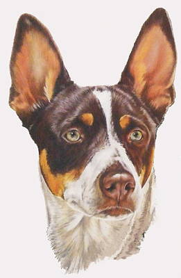 Drawing - Rat Terrier by Barbara Keith
