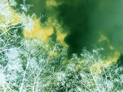 Photograph - Reach For The Sky by Florene Welebny