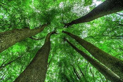 Photograph - Reaching For The Sky by David Pyatt