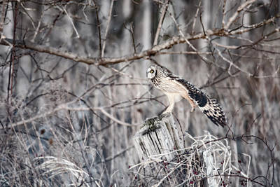 Photograph - Ready For Take Off by Tracy Winter