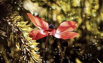 Photograph - Red Anemone by Pezibear