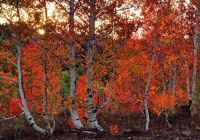 Red Aspens Art Print by Leland D Howard