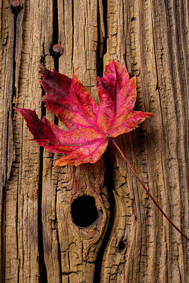 Knothole Photograph - Red Autumn Leaf by Garry Gay