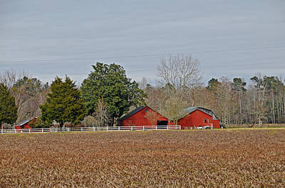 Photograph - Red Barns by Linda Brown