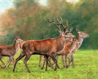 Stag Painting - Red Deer by David Stribbling