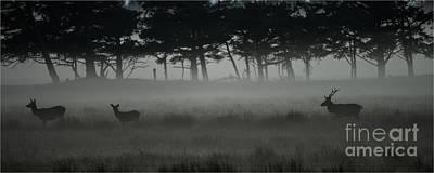 Photograph - Red Deer by Jorgen Norgaard