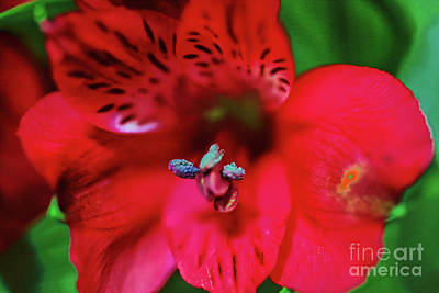 Photograph - Red Flower by Rick Bragan
