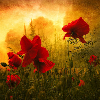 Red For Love Art Print by Philippe Sainte-Laudy