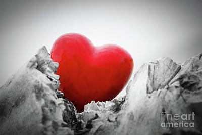 Photograph - Red Heart In A Tree Trunk And Branches. Love Symbol. Red Against Black And White by Michal Bednarek