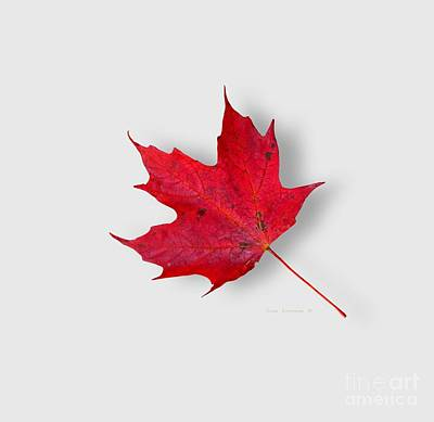 Photograph - Red Maple Leaf by John Stephens