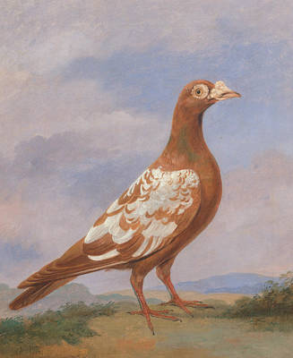 Carrier Painting - Red Pied Carrier by Dean Wolstenholme