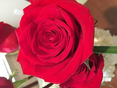 Photograph - Red, Red Rose by Kay Gilley