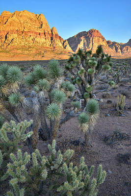 Photograph - Red Rock Canyon by Ray Mathis