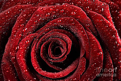 Photograph - Red Rose Background by Anna Om