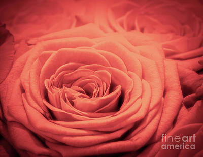 Photograph - Red Rose Background. Romantic Love Greeting Card by Michal Bednarek