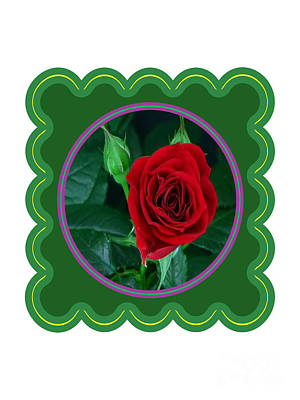 Photograph - Red Rose Flower Floral Posters Photography And Graphic Fusion Art Navinjoshi Fineartamerica Pixels by Navin Joshi