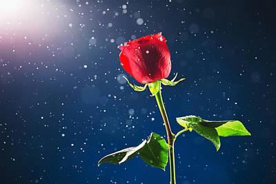 Red Rose On Snow Background Art Print by Valentin Valkov