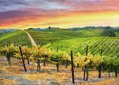 Photograph - Red Soles Vineyard by Sharon Foster