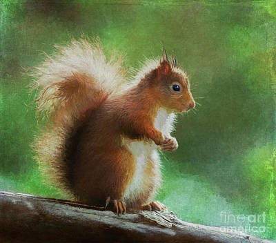 Digital Art - Red Squirrel Sciurus Vulgaris by Liz Leyden