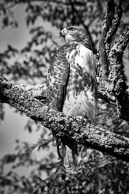 Photograph - Red Tailed Hawk 4 by Joye Ardyn Durham