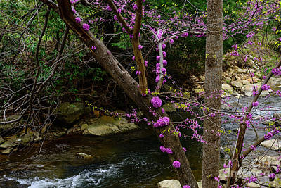 Photograph - Redbud And River by Thomas R Fletcher