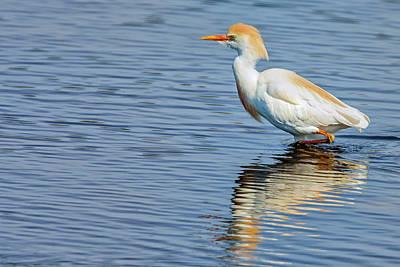 Colorful Photograph - Reddish Egret by Rick Higgins