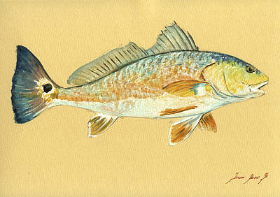Poster Painting - Redfish Painting by Juan  Bosco