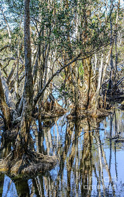Photograph - Redhead Lagoon 1 by Werner Padarin