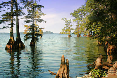 Art Print featuring the photograph Reelfoot Lake by Bonnie Willis