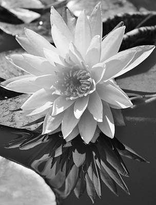Photograph - Reflecting Water Lily by Bruce Bley
