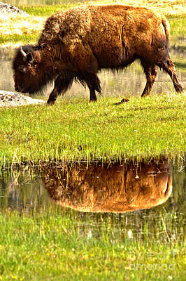 Photograph - Reflection In The Grassy Marsh by Adam Jewell