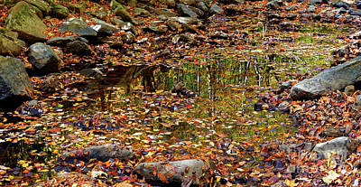 Photograph - Reflections Of Fall by Paul Mashburn