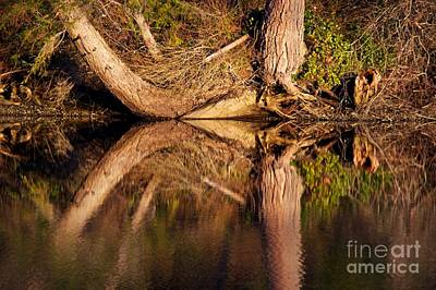Photograph - Reflections by Sean Griffin