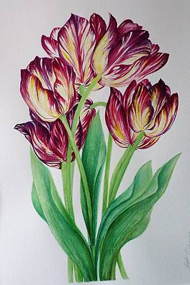Painting - Rembrandt Tulips by Barbara Anna Cichocka