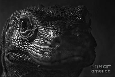 Photograph - Reptiles by Doc Braham