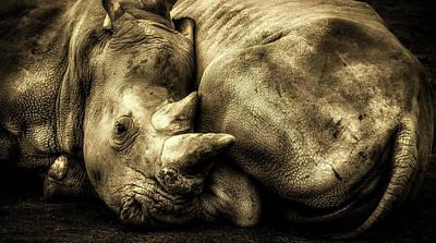 Photograph - Resting Rhinos by Pixabay