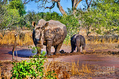 Photograph - Rhino And Son by Rick Bragan