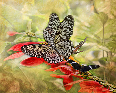 Large Tree Nymph Photograph - Rice Paper Butterflies by TN Fairey