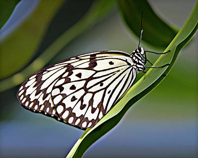 Photograph - Rice Paper Butterfly 8 by Walter Herrit