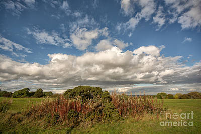 Richmond Photograph - Richmond Racecourse by Nichola Denny