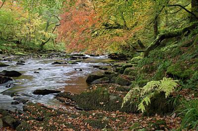 Photograph - River Barle In Somerset by Pete Hemington