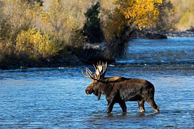 Photograph - River Crossing by Shari Sommerfeld
