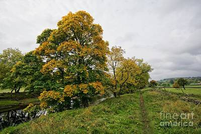 Dale Photograph - River Swale by Nichola Denny
