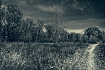 Photograph - Road Through The Cottonwoods by Sandra Selle Rodriguez